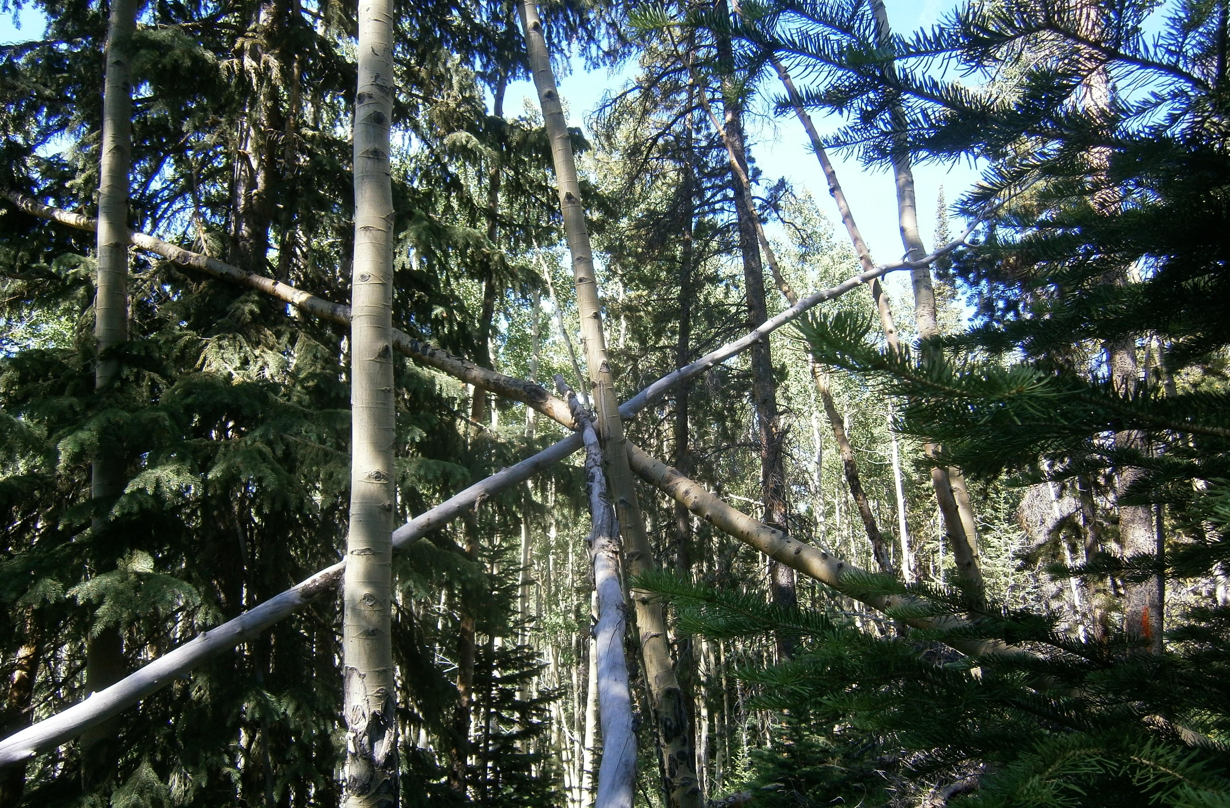 Tree Formation from BigfoootYowieYeti.com